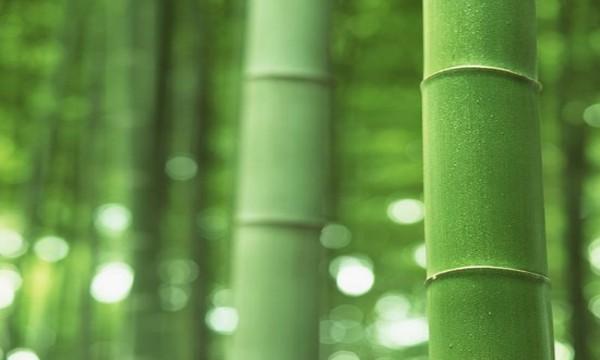 成都装修公司前十强为你介绍新型墙面装饰材料竹木纤维也许更美丽!