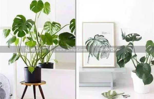 聊聊那些绿色植物适合放置在家里,在这个暑气熏蒸的盛夏给眼睛降降温~