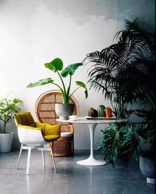史上最全的吸毒植物 · 刚装好的新房必备